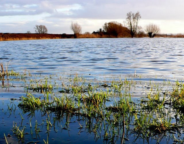Flooded_Fields_on_Hay_Moor_-_geograph.org.uk_-_1137416