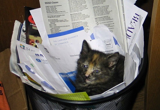 Recycling Cat crop