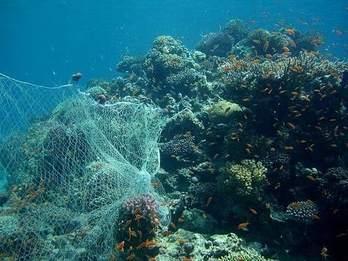 CIMG2733_Fishing_Net_On_Reef