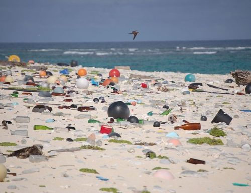 Stemming the tide of plastic bags