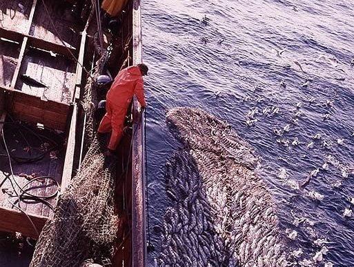 Fisherman landing a catch