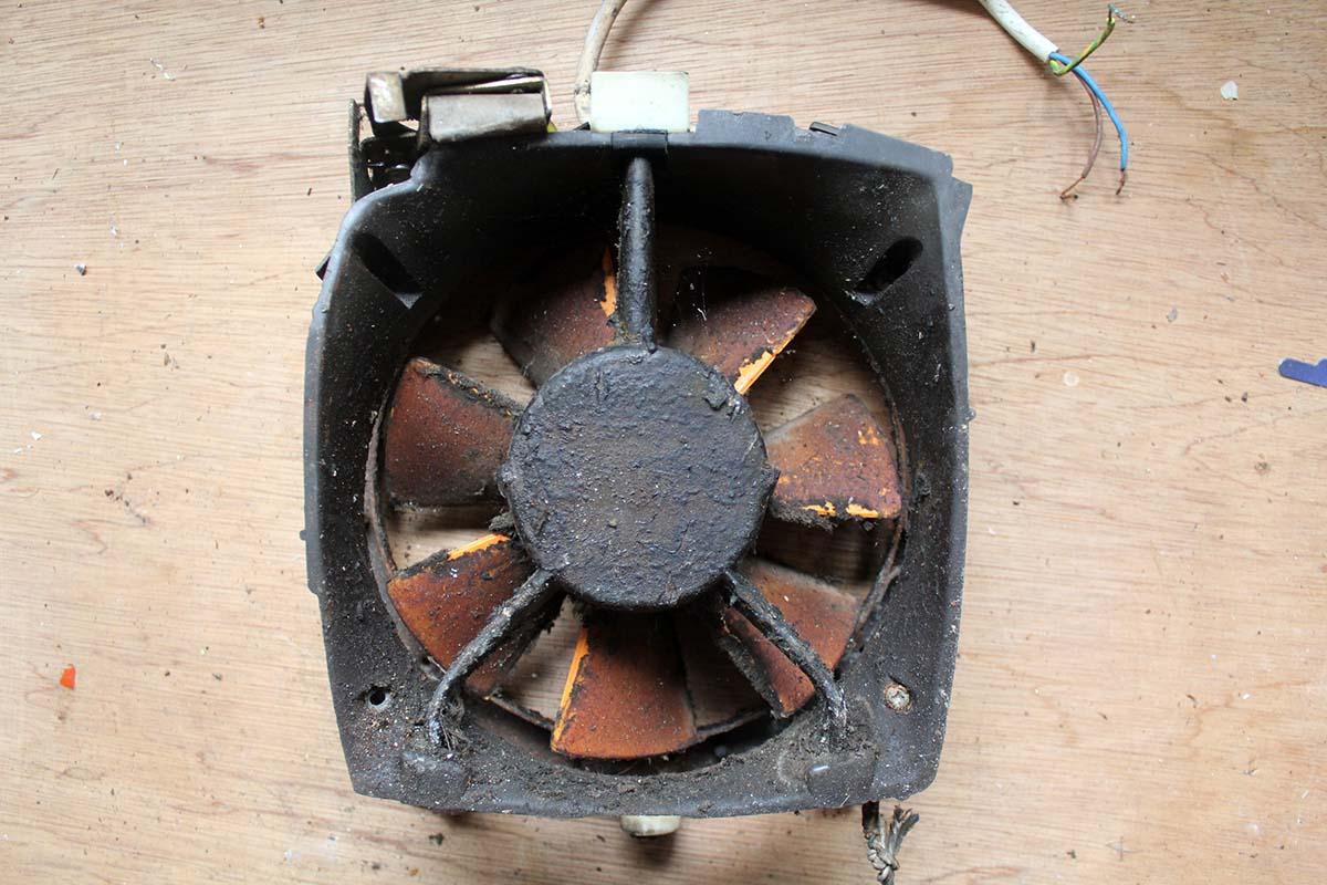 Picture of fan