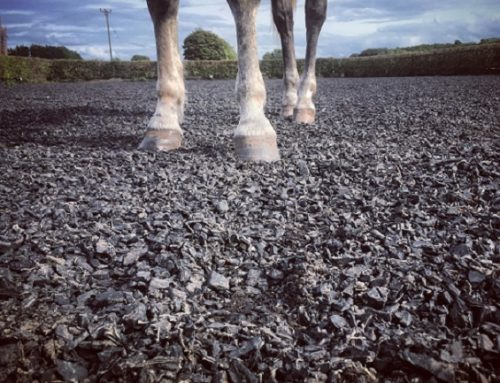 Should horses run on tyres?
