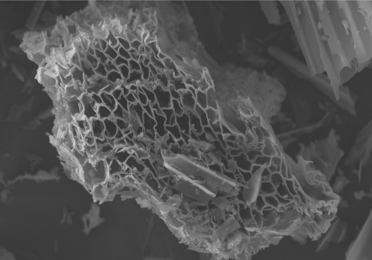Biochar structure