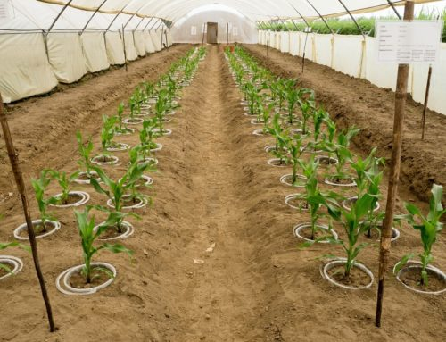 Cropping up: can biochar improve agricultural resource efficiency?