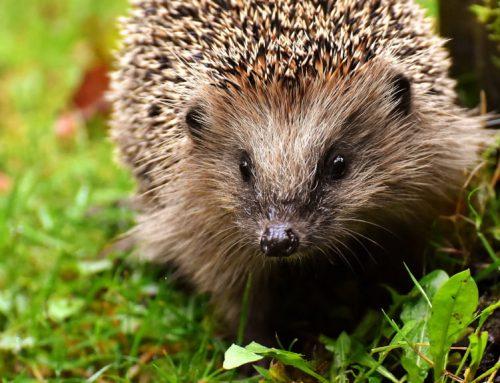 Back of the Net: Will the Biodiversity Net Gain policy improve UK biodiversity?